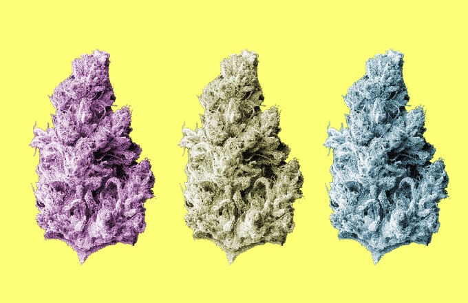 best weed strains, og kush, blue dream, ganja dispatch, marijuana strains